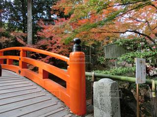 フェンスの横に座っている木製のベンチの写真・画像素材[1665734]