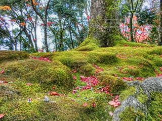 芝生のエリアでは、木の写真・画像素材[1665735]