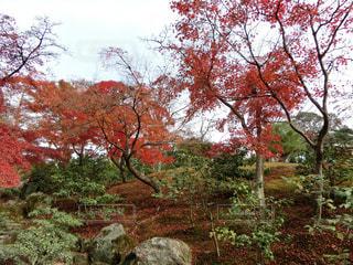 近くの木のアップの写真・画像素材[1665738]