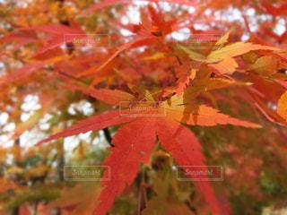 近くの木のアップの写真・画像素材[1665746]