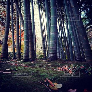 ツリーの横にあるヤシの木のグループの写真・画像素材[1685296]
