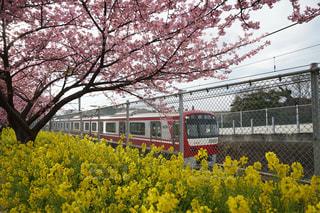 電車,黄色,菜の花