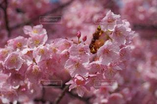 近くの花のアップの写真・画像素材[1833114]