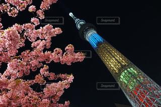 春,桜,ピンク,スカイツリー,夜桜,ライトアップ,インスタ映え