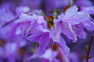 花のクローズアップの写真・画像素材[2107540]