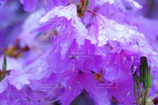 花のクローズアップの写真・画像素材[2107544]