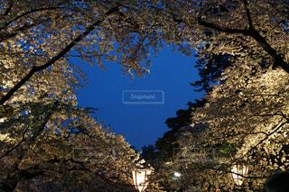 自然,桜,白,青,ハート