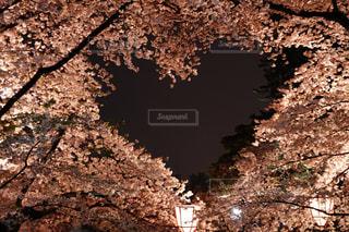 自然,桜,ハート