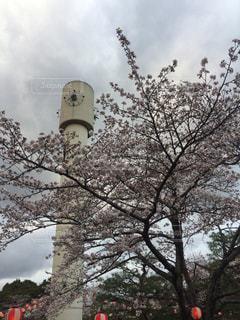 風景 - No.455113
