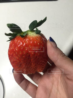 食べ物,赤,いちご,フルーツ,果物,フレッシュ,イチゴ