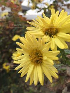 花,庭,フラワー,黄色,外,イエロー