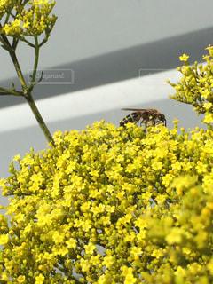 花,庭,フラワー,黄色,鮮やか,外,蜂,イエロー,色,ハチ,はち