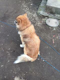 犬,庭,後ろ姿,背中,わんこ,おすわり,わんちゃん