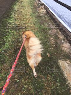 犬,庭,後ろ姿,散歩,背中,わんこ,わんちゃん