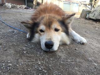 犬,庭,わんこ,わんちゃん,おねだりの顔
