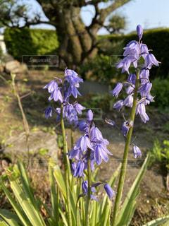 花のクローズアップの写真・画像素材[3144983]
