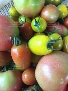 食べ物,赤,黄色,トマト,野菜,ミニトマト,食品,食材,フレッシュ,ベジタブル,アイコ
