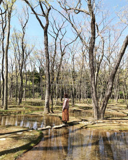 自然,空,森林,木,屋外,水面,池,樹木,草木,エリア