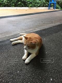 道の端に横たわっている茶色と白犬の写真・画像素材[938377]