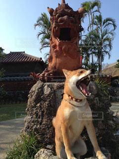 犬の写真・画像素材[148271]