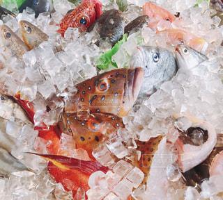 美味しい魚たちの写真・画像素材[939416]