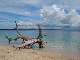 Trip to Cebu - No.939438