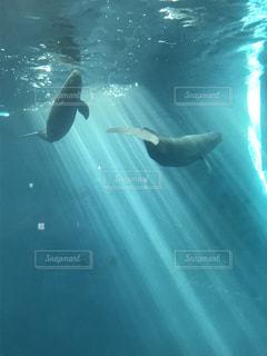 水面下を泳ぐイルカ - No.939259