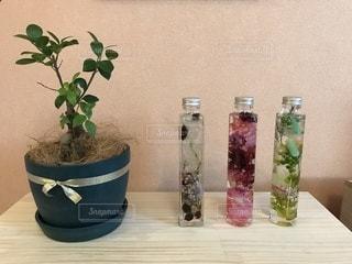 花,観葉植物,ハーバリウム
