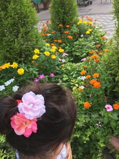 花,ピンク,子供,女の子,人物,フラワーアレンジ,日中