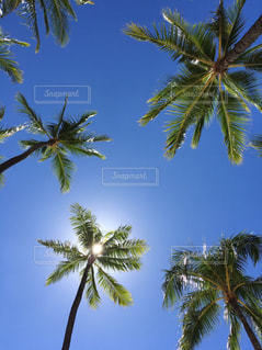 空の写真・画像素材[1095071]
