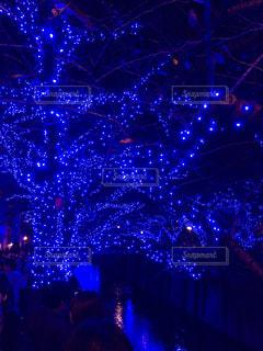 クリスマス,目黒川,青の洞窟