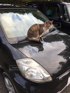 猫が車の上に座っての写真・画像素材[1259503]