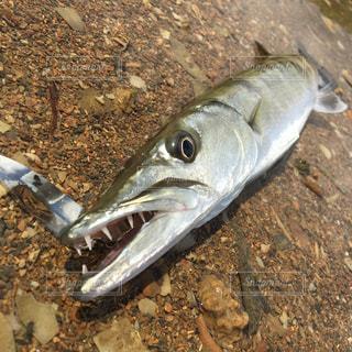 近くに魚のアップの写真・画像素材[942024]