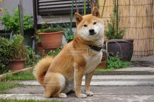 建物の前に座っている犬の写真・画像素材[975762]