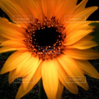 花の写真・画像素材[171497]
