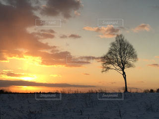 背景の夕日とツリーの写真・画像素材[1734963]