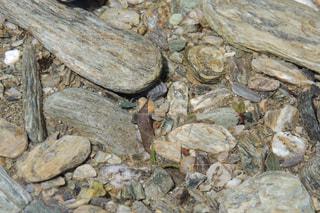 近くの岩のアップの写真・画像素材[942535]