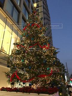 イルミネーション,クリスマス,ツリー,表参道