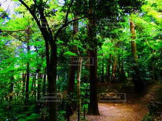 成田山公園の緑の写真・画像素材[1157610]