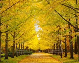 秋,紅葉,屋外,景色,Autumn,東北,山形県