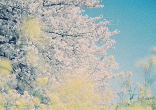 近くの木のアップの写真・画像素材[1233731]