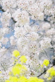 近くの花のアップの写真・画像素材[1270871]