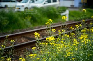 花,フラワー,線路,菜の花