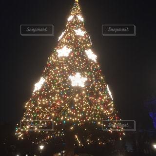 夜,ライトアップ,クリスマス,ツリー,ディズニー