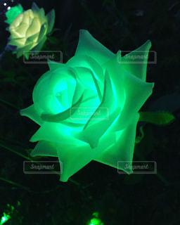 自然,屋外,緑,綺麗,イルミネーション,可愛い,素敵