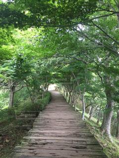 風景,公園,森林,木,屋外,樹木,歩道