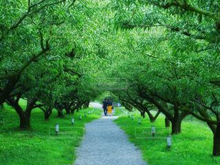 緑の草のツリーの写真・画像素材[949213]