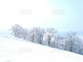 雪をスノーボードに乗る男覆われた斜面の写真・画像素材[950101]