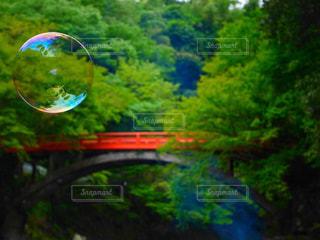 森を流れる川の写真・画像素材[981686]