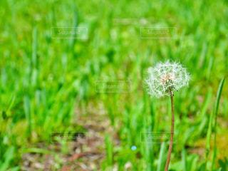 近くの植物のアップの写真・画像素材[1178146]